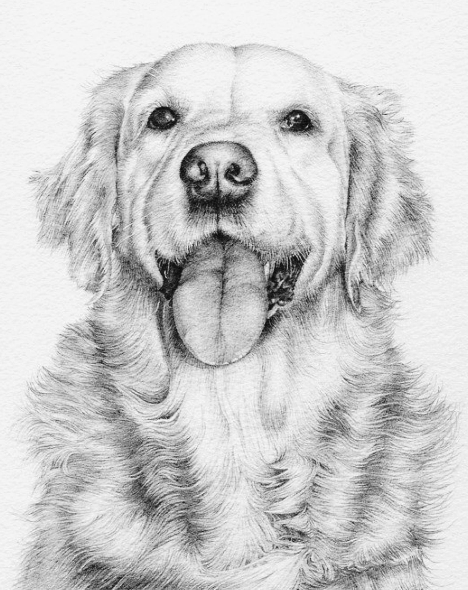Adult Coloring Page Pencil Drawings Of Animals Golden Retriever Art