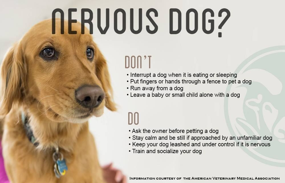 Good Tips For Owners With Nervous Aggressive Dogs Colorado