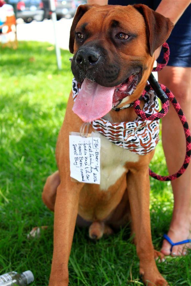 California Labrador Retrievers More Rescue 858 366 9103 Rescue Dogs Dogs Puppies