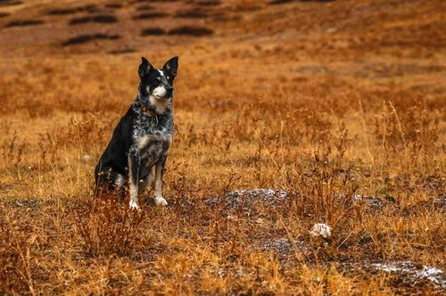 Dog In A Field Pretty Pet Photography Dog Training Near Me