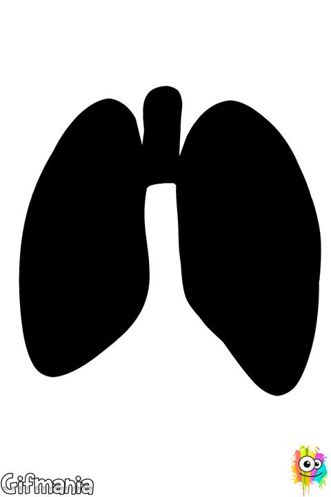 Dibujo De Pulmones Para Colorear Pulmones Organos Del Cuerpo Humano Pulmones Humanos