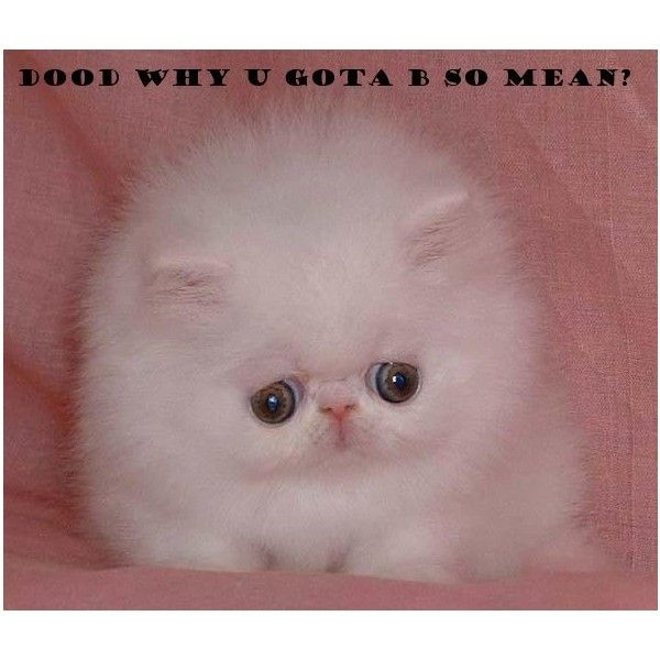 Lolcats 'n' Funny Pictures of Cats - I Can Has Cheezburger? - Page 710 ❤ liked on Polyvore featuring backgrounds, funny, lol, animals and cute animals
