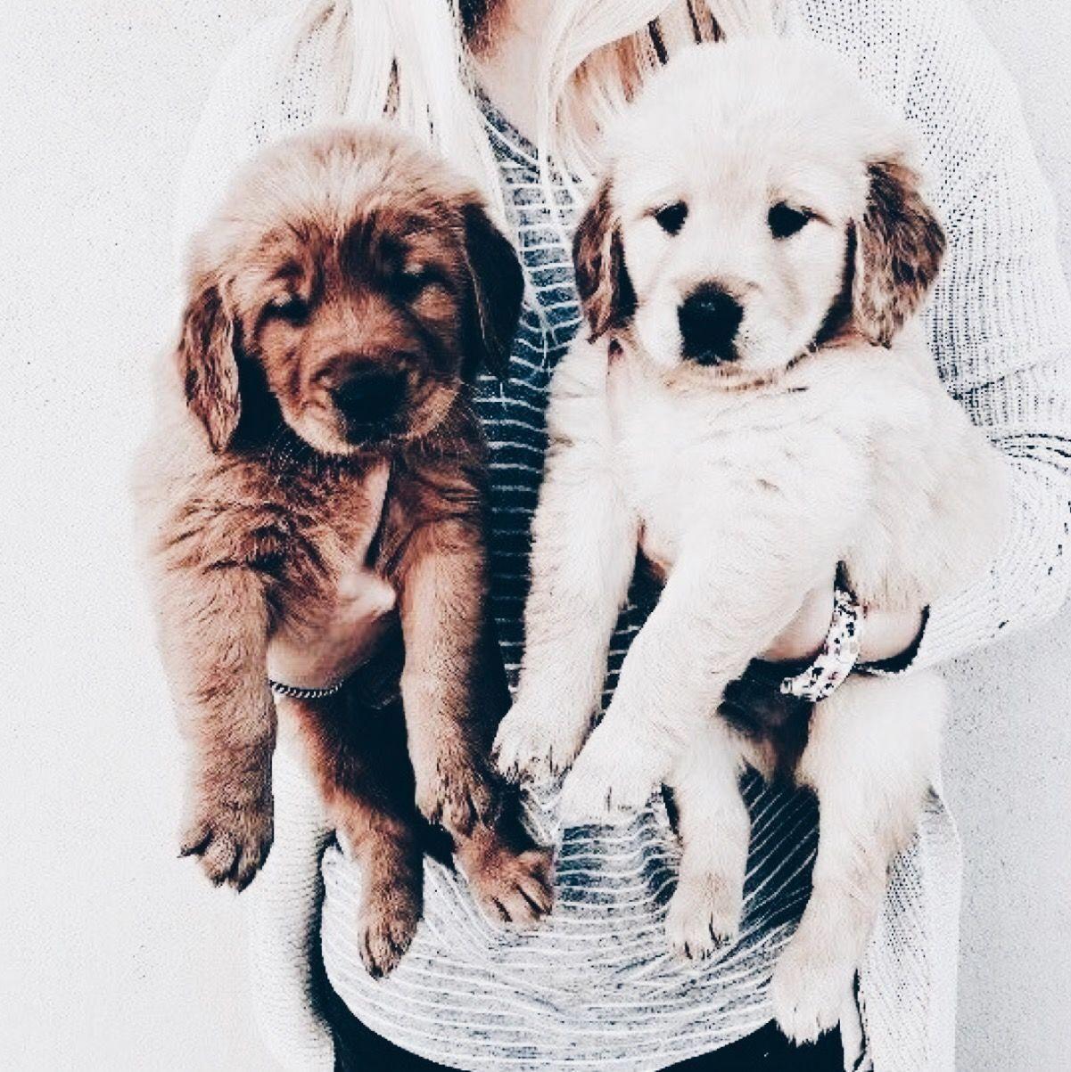 Yielding Dog Training Heel Dog Pinkdogsaccessories Cute Dogs