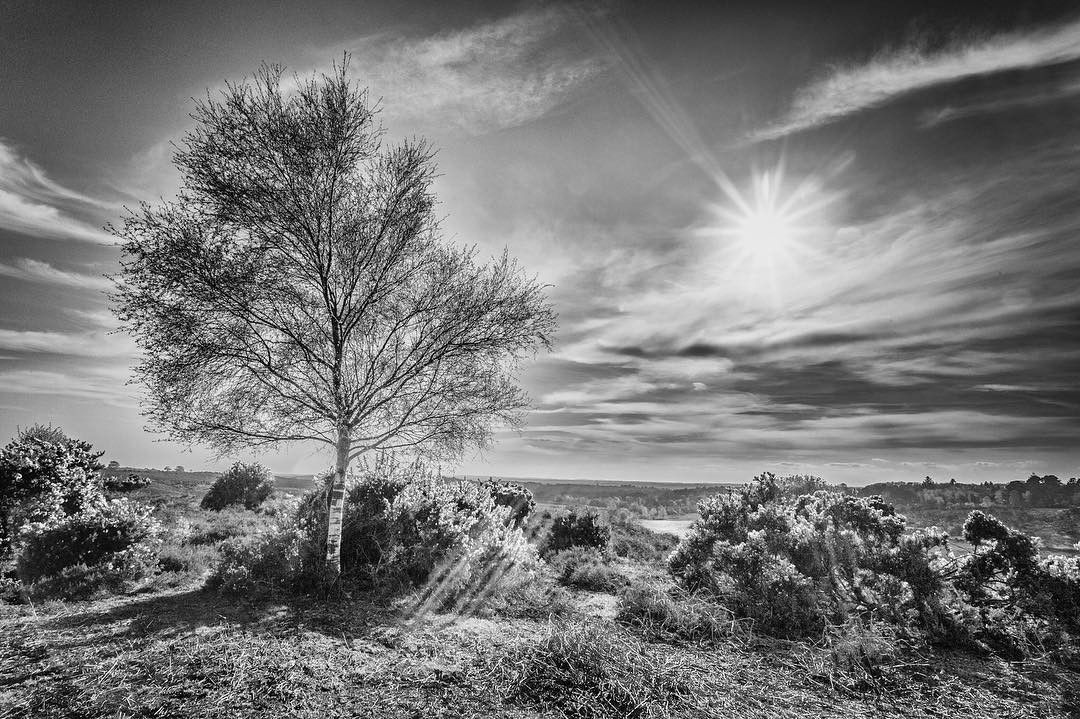 New Forest In Black And White All Those Lovely Rich Colours Are Gone Being Replaced By Photography Website Architectural Photographers