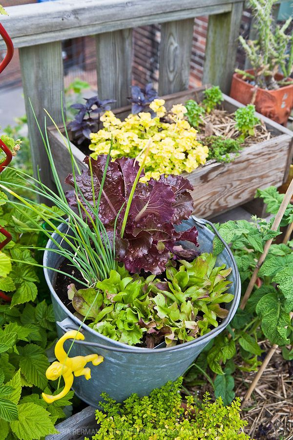 Leaf lettuces and other edibles and ornamental plants ...