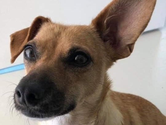 'Sweetheart' Rescue Dog Up For Adoption In Boulder