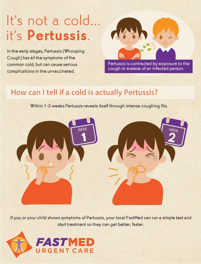 a study of whooping cough or pertussis Whooping cough, which is caused by the bacterium bordetella pertussis, is a highly contagious respiratory illness that can be serious, and even deadly for infants.