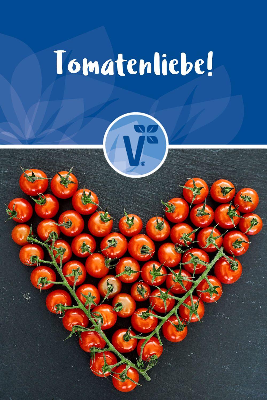 Tomaten Ernten Pflanzen Und Pflegen Tomaten Pflanzen Tomaten Ernten Tomaten