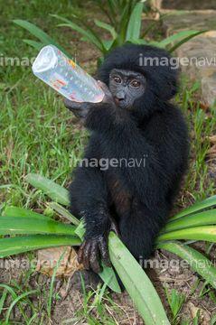 Too Freakin Cute Animals おしゃれまとめの人気アイデア Pinterest Chris R ボノボ 動物 写真 素材