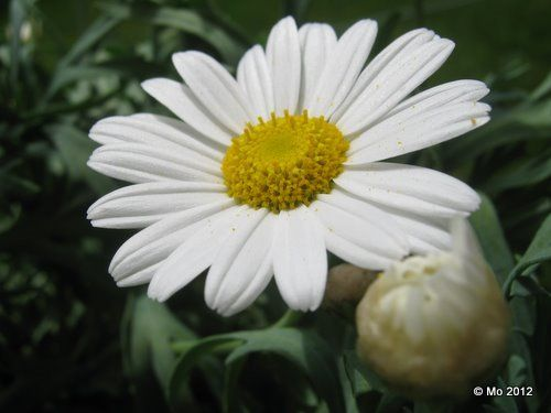 daisy is born...