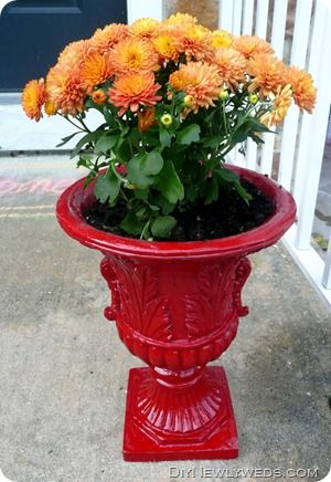 Red Outdoor Planter With Orange Mums...I May Do This To