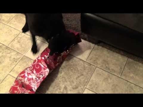 Pug christmas story - YouTube