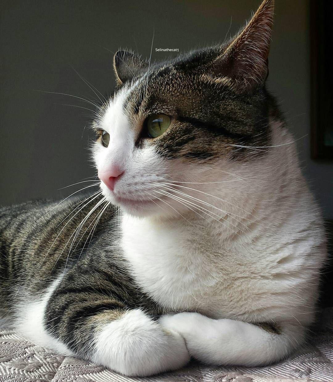 Selina Super Cute Cat Instagram ' Adorable #cute #cats #pet #instagram #kitty