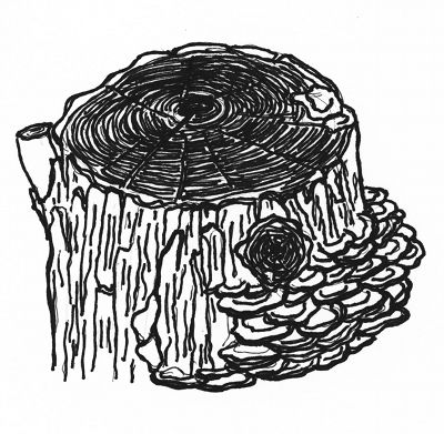 Tree Stump Cartoon Stock Images, Royalty-Free Images & Vectors ...