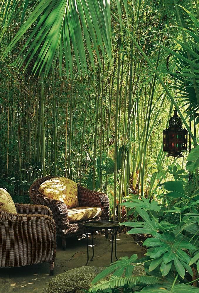 Amenagement Jardin, Jardin Tropical Et