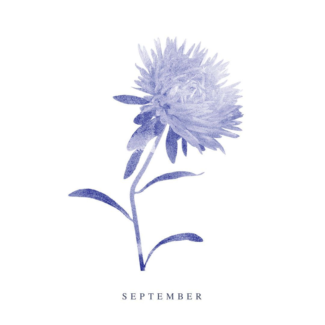 September Birth Flower Aster Aster Flower Tattoos September Birth Flower Aster Flower
