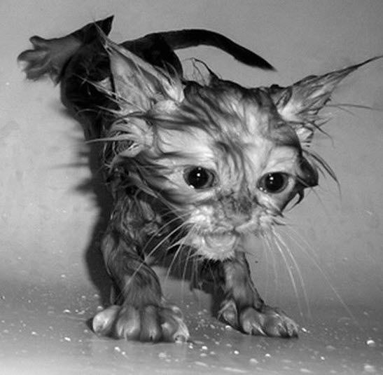 15 Hilarious Pictures Of Wet Cats Baby Animals Cute Animals