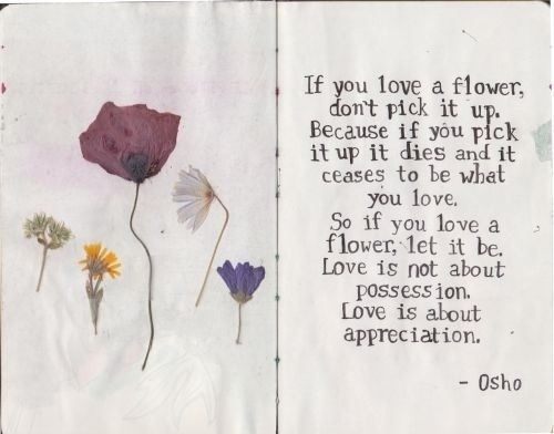 Osho Don T Pick Flower If You Love A It Up Because