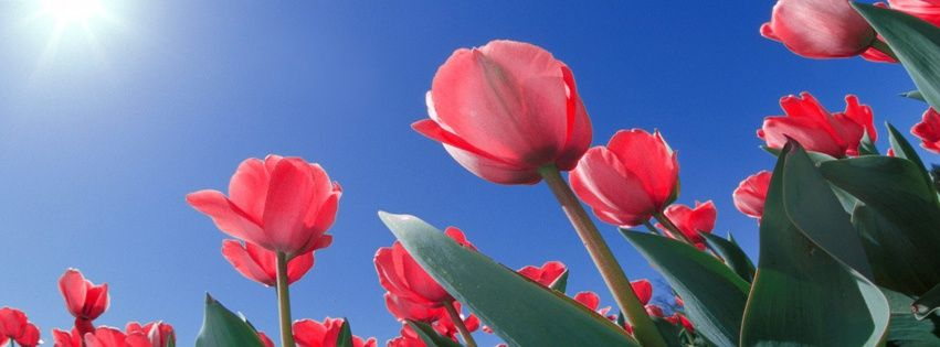 FB Cover Photos for Free | Flower-FB-Covers-Timeline-Free | Places ...