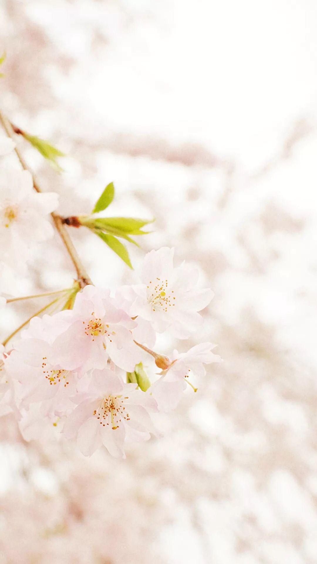 japanese blossom | ✥ g∊ïshα ✥ | Pinterest | Japanese blossom
