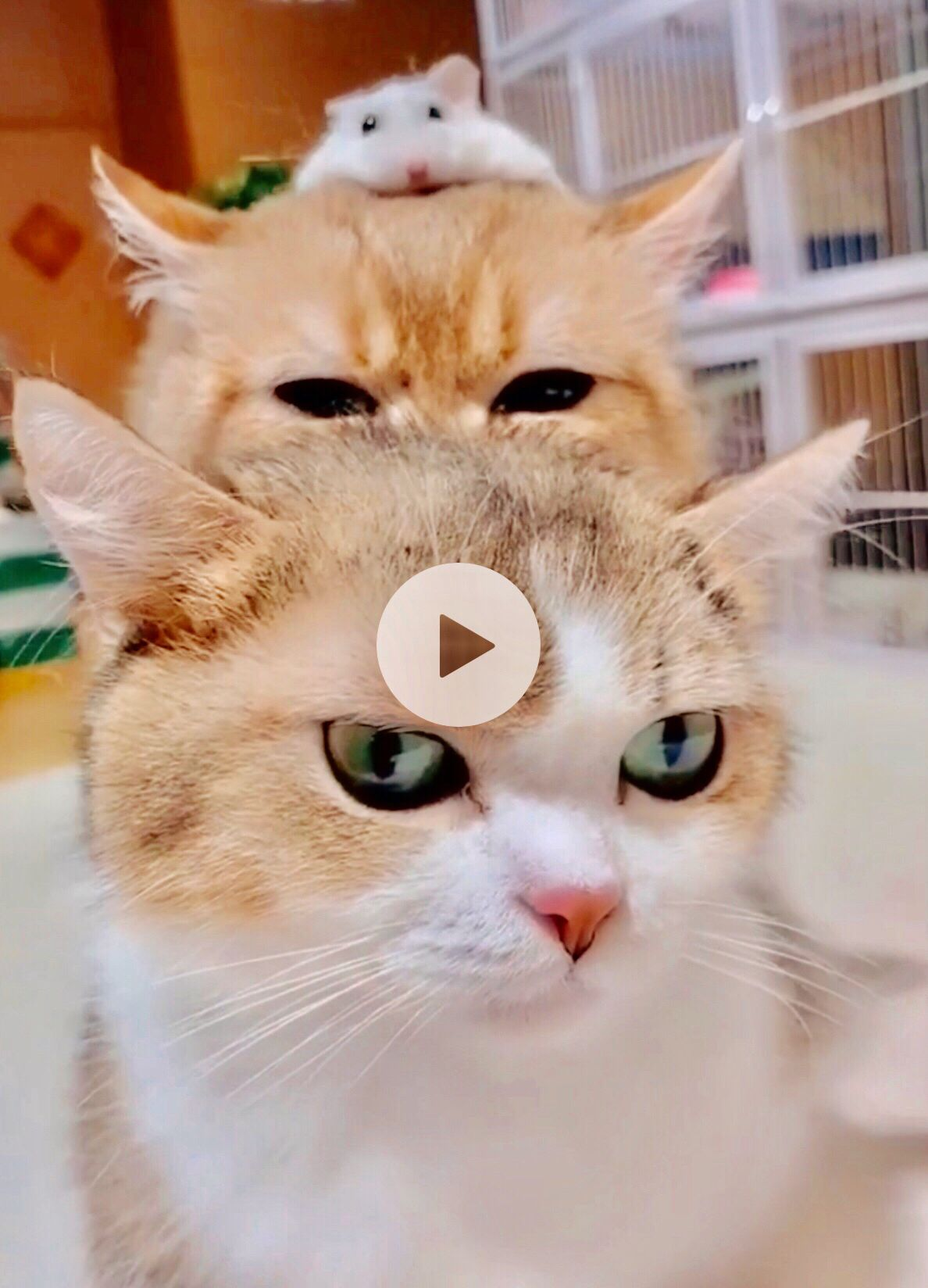 Cats And Hamster Cute Animals Crazy Cats Cats And Kittens