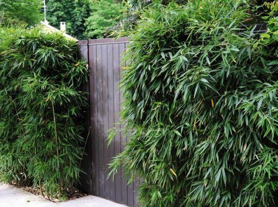 Bambou Jardin : nos idées d\'aménagement | Limites- écrans visuels ...