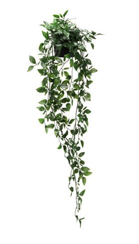 Hanging Plant Without Planter Artificialplantsindoorherbsgarden Bunga Gantung Bunga Gantungan