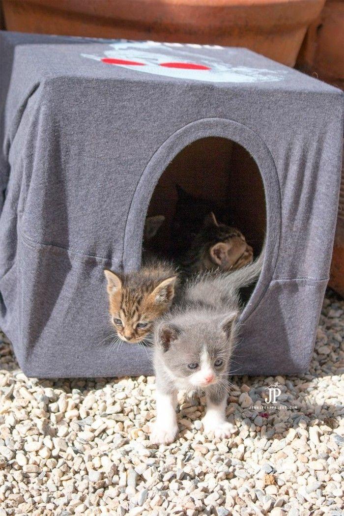 Ideal katzenspielzeug selber machen katzenhaus aus tshirt