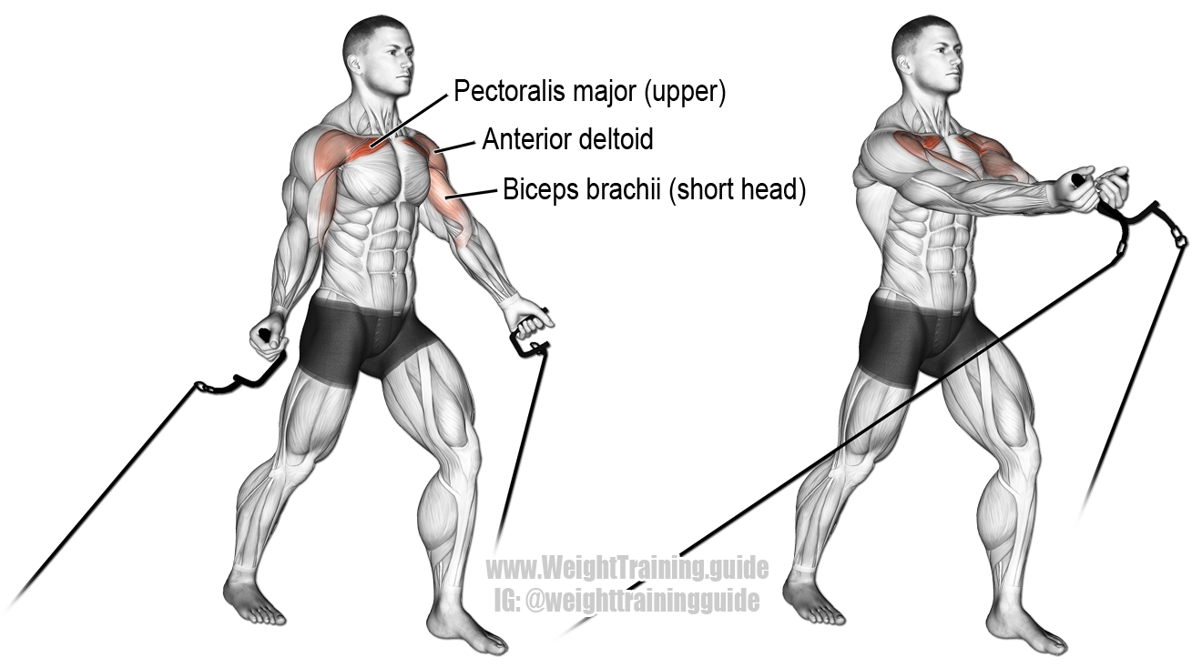 shoulders exercises video exercise guides muscle strength