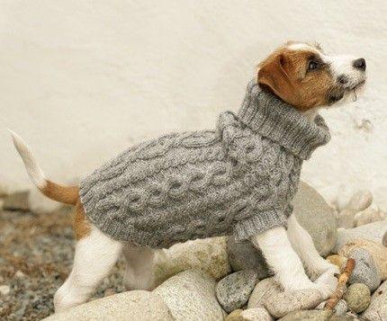 patron tricot gratuit manteau chien