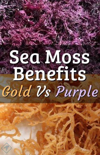 Gold Irish Sea Moss Vs Purple Sea Moss #irishsea Sea Moss Benefits: Gold Vs Purple | Click the image to view the differences, benefits, and products of yellow Golden and Purple Sea Moss. Learn how to use purple and gold irish sea moss. | #alkalinefoodshoppinglist #afsl #drsebi #drsebiapproved #recipes #benefits #products #healthimprovement #repost #repin #diyhomeremedy #drsebidiet #drsebitips #healthtips #howto #irishsea