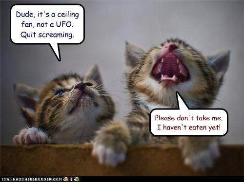Quit Screaming Just Like My Cat She Goes Nuts When She Even Sees