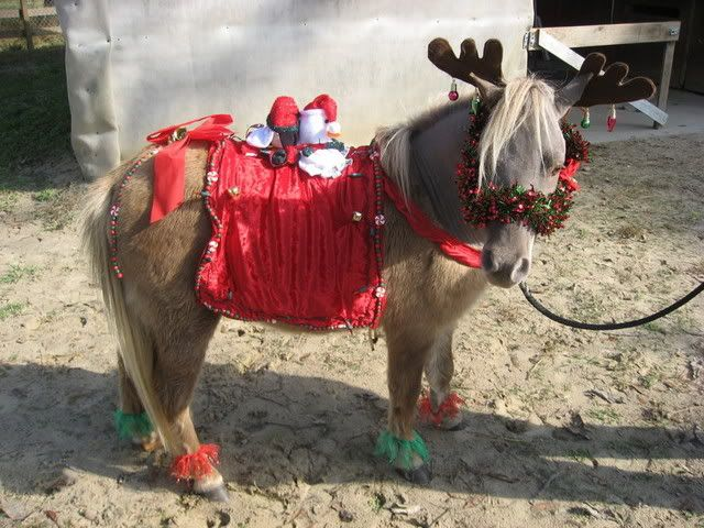 Christmas Horse Parade Holiday Costumes Miniature Forum Lil