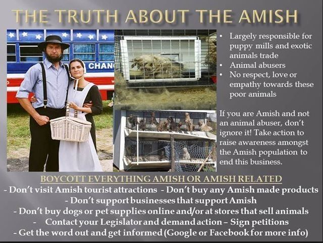 The Amish puppy mill owners~so far from godly! | Puppy Mills