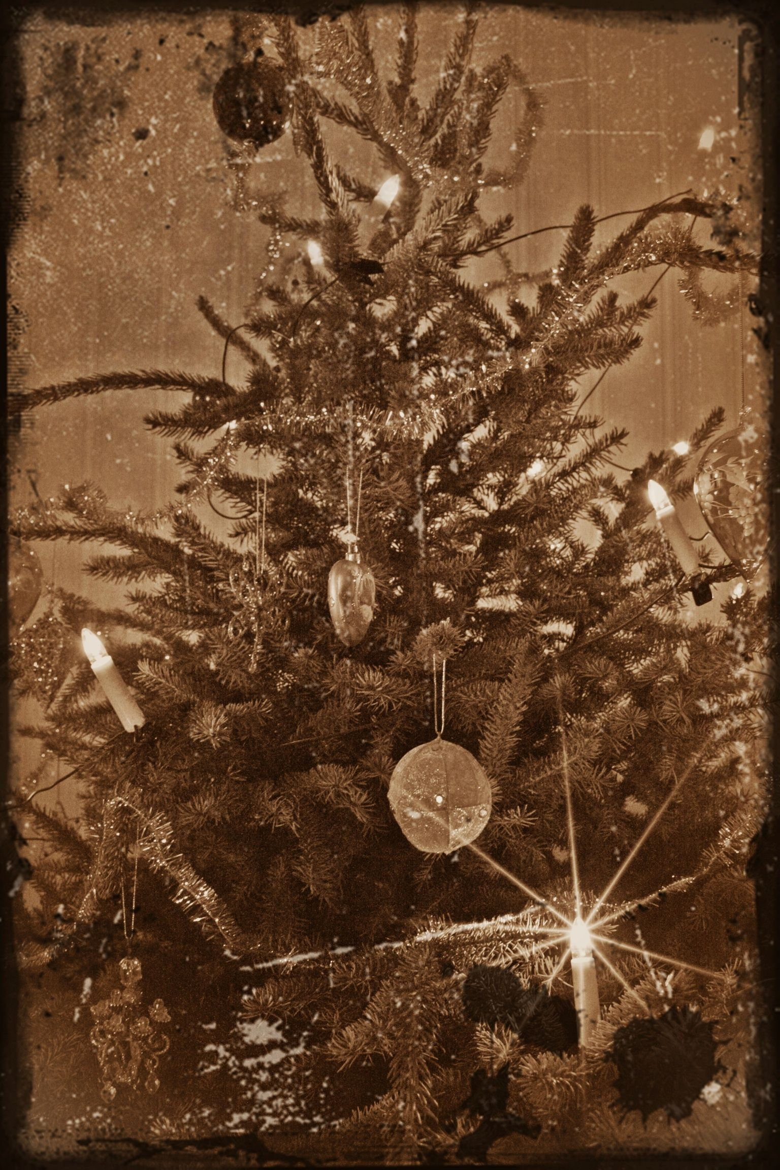 Christmas tree | ~oh Christmas Tree-How lovely are your branches ...