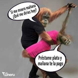Imágenes De Monos Con Frases Chistosas Divertidas Graciosas Risas