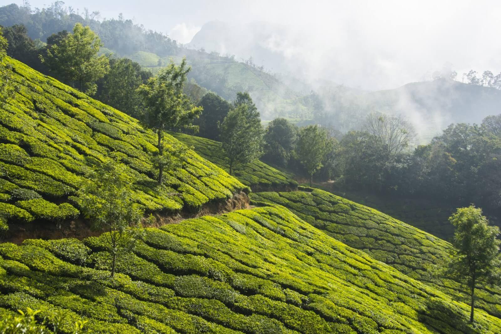 cc69788edb58e689b8842a90afe913ea - Things To Do In Tea Gardens