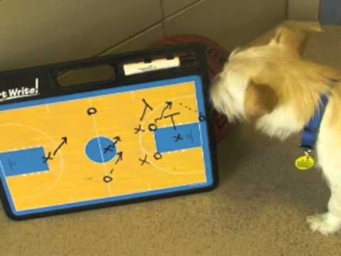 March Madness is in full swing at the Wisconsin Humane Society :)