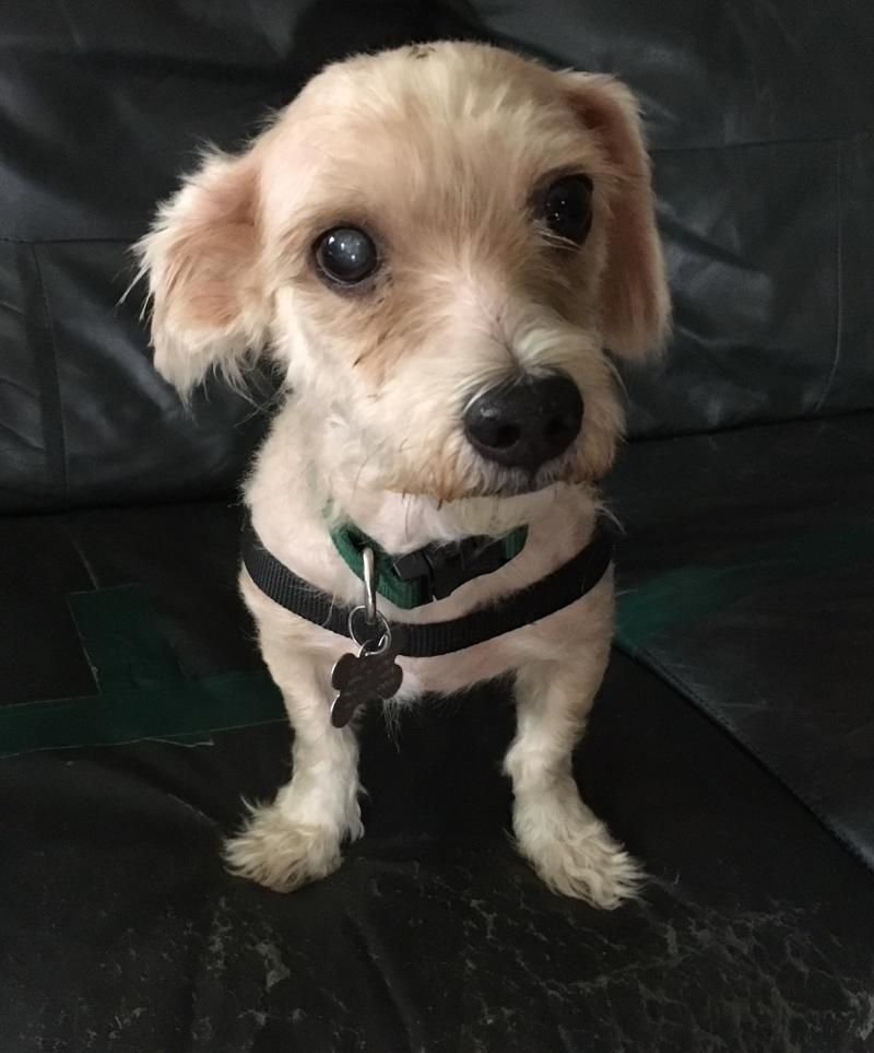 Adopt Sunny on Shelter dogs, Dogs, Rescue dogs