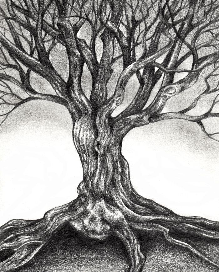 Sketsa Gambar Pohon Gambar Pemandangan Sketsa In 2019 Drawings