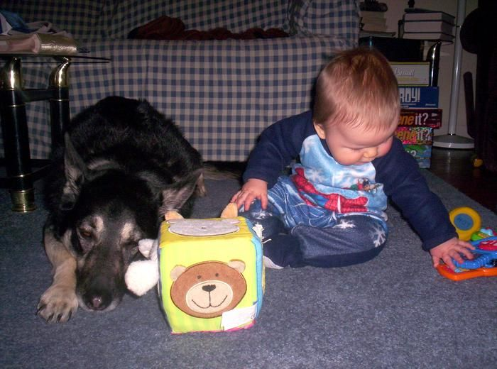 This Video of German Shepherd Dogs Playing with Babies is