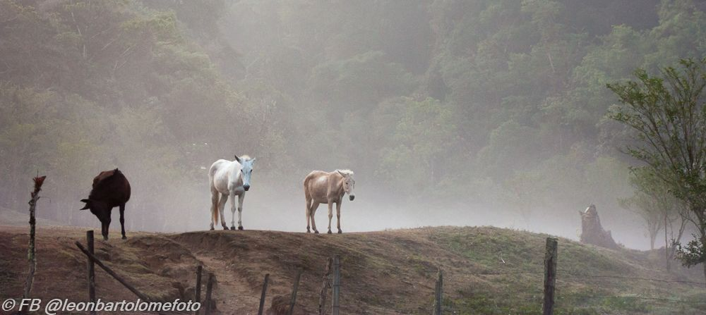 Caballos en la lluvia by Leonbartolome on DeviantArt