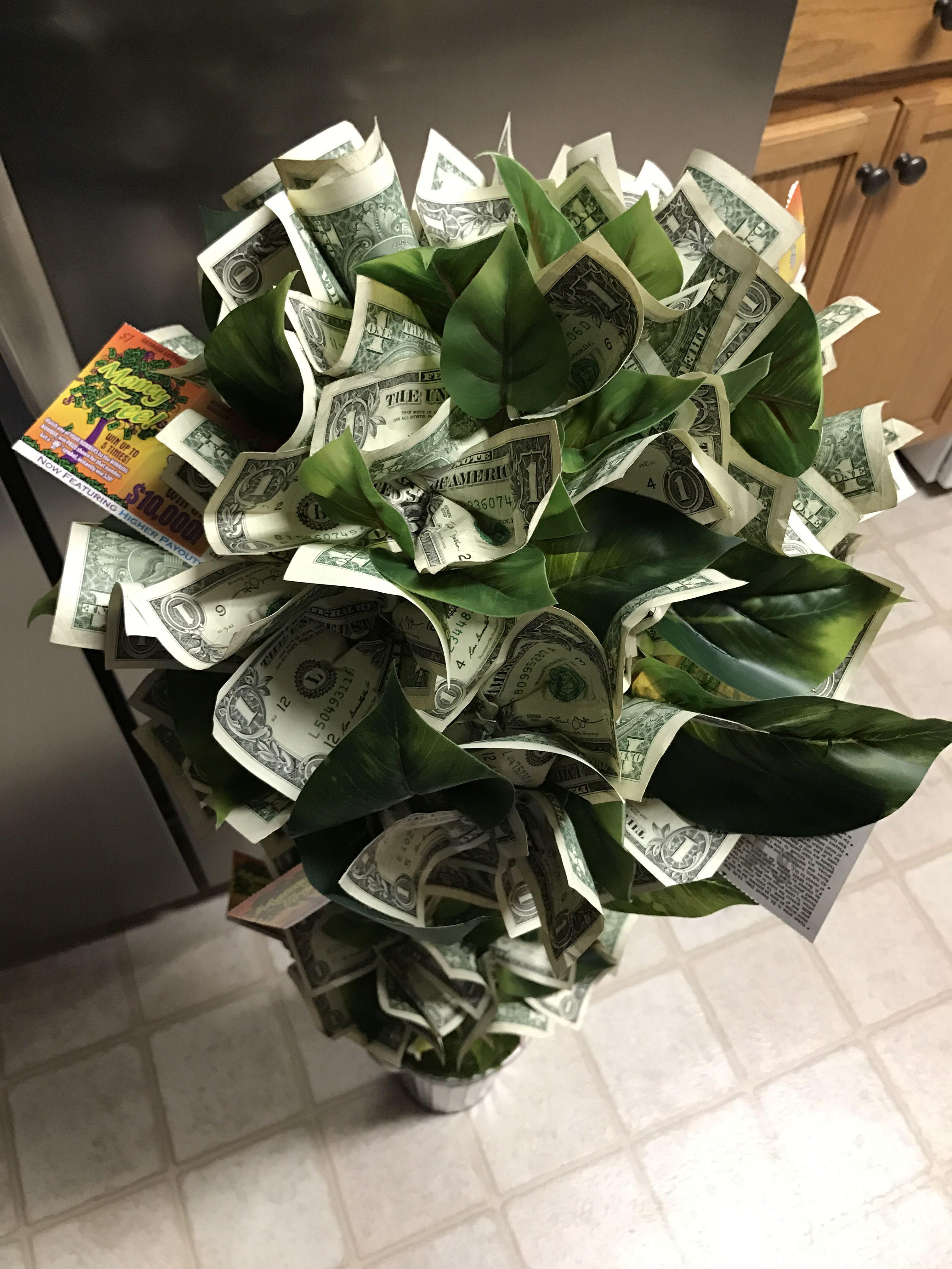 Money tree money trees succulents plants