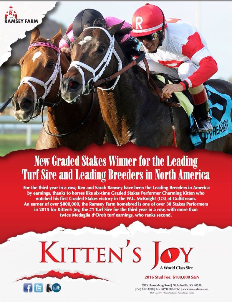 Kitten S Joy Kitten North America Horseracing