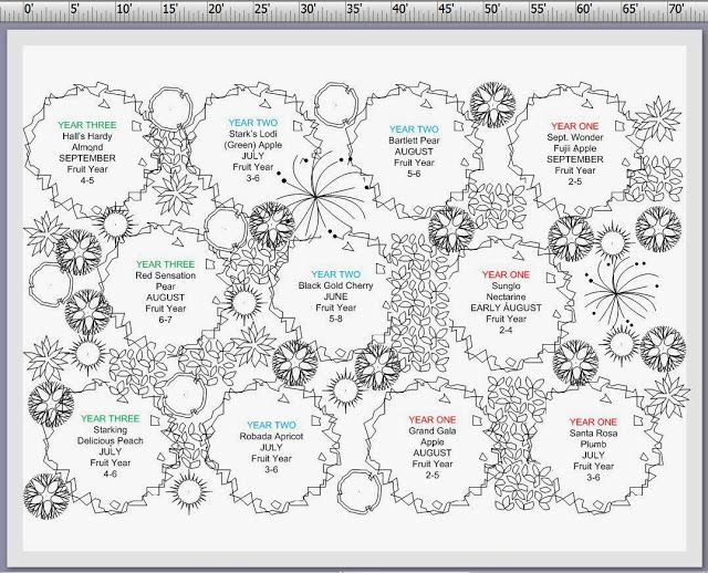 Planning A Small Orchard Orchard Design Orchard Garden Fruit Garden Layout