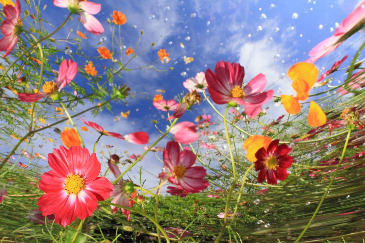 Αποτέλεσμα εικόνας για national geogr flowers