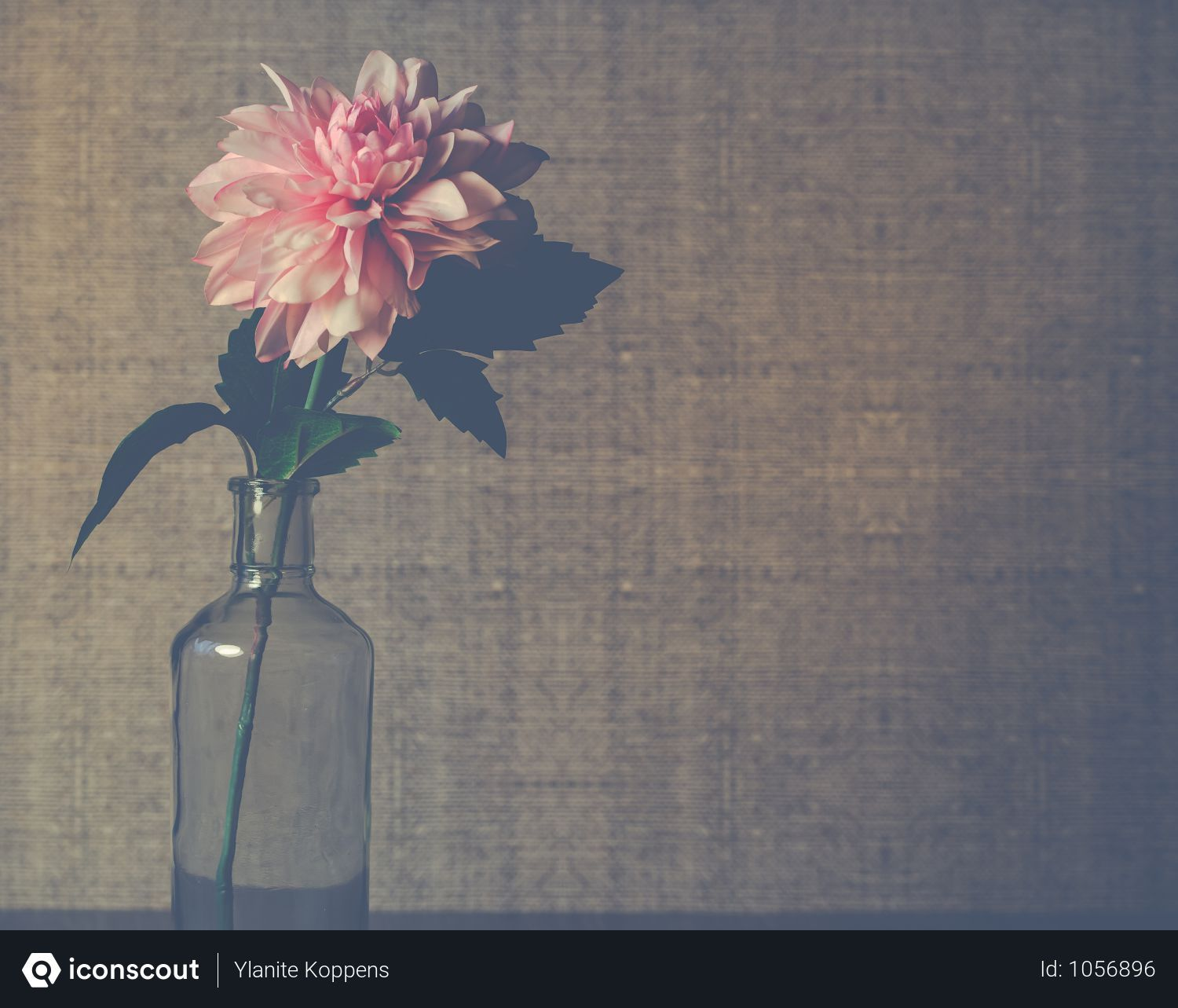 Free Clear Glass Flower Vase With Pink Dahlia Flower In Bloom