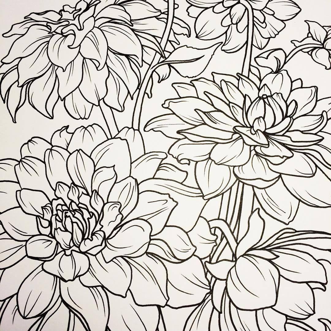 #DAHLIAS! #wip #floral #drawing