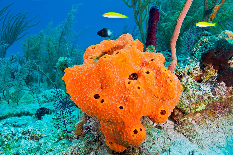 real ocean sponges - HD1920×1280