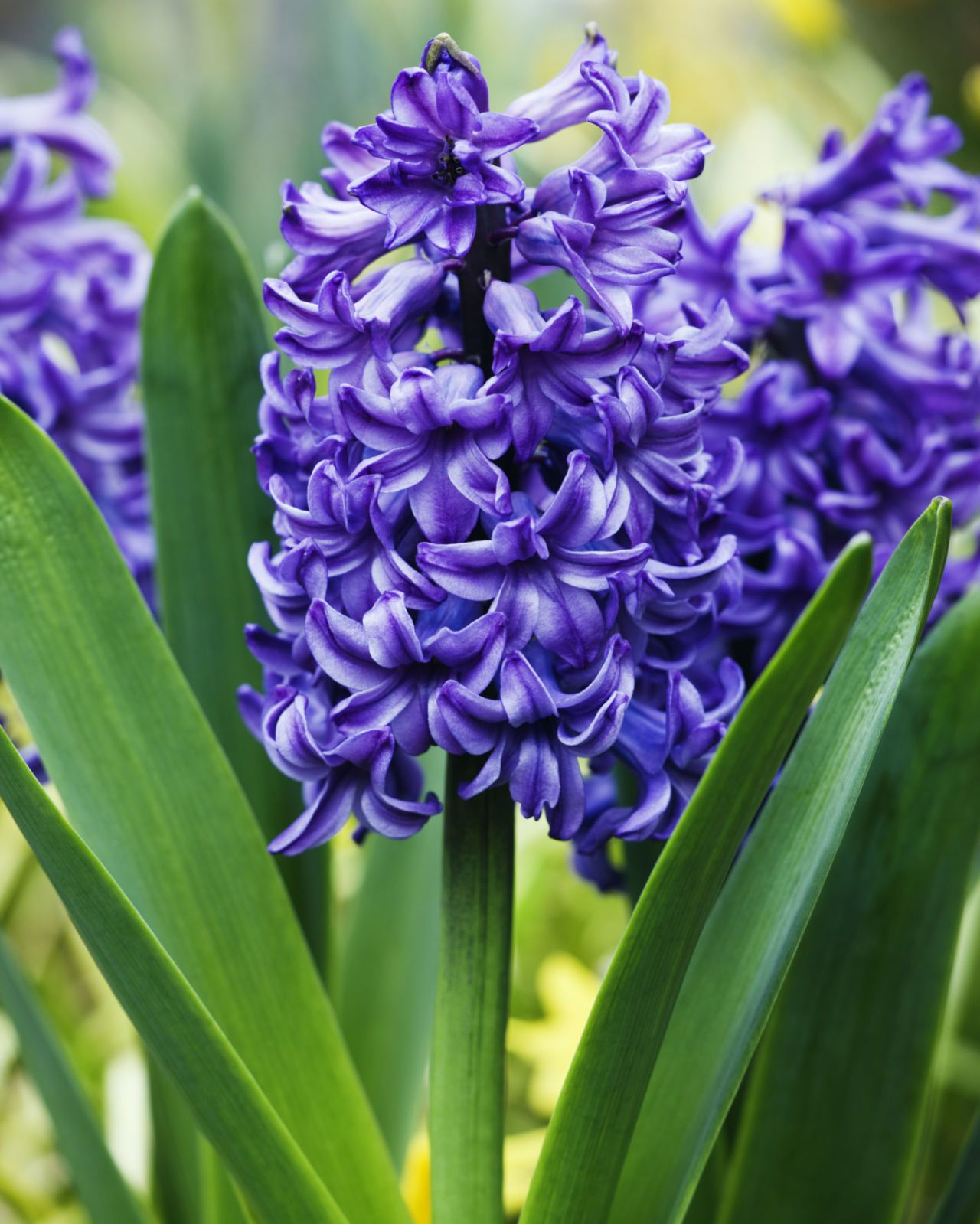 The Surprising Meanings Behind Your Favorite Flowers Flower Meanings Beautiful Flowers Fragrant Flowers